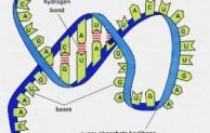 Apa Itu RNA ?