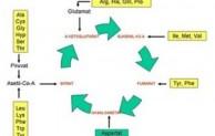 Proses Metabolisme Protein