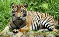 Fauna Langka Indonesia