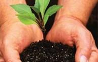 Cara Melestarikan Alam Dan Lingkungan