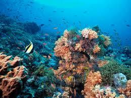 Keindahan Laut Indonesia